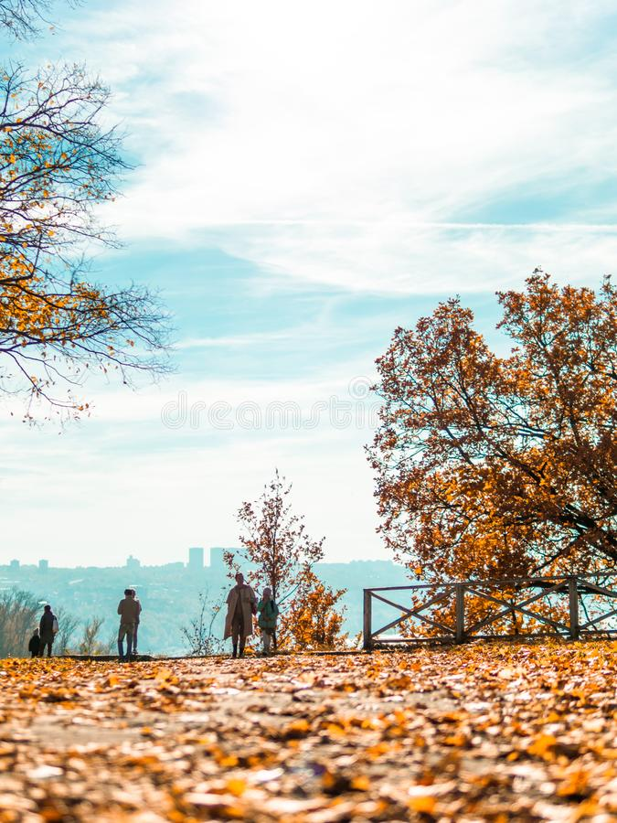 Autumn park with falling leaves,vertical,copyspace royalty free stock photography