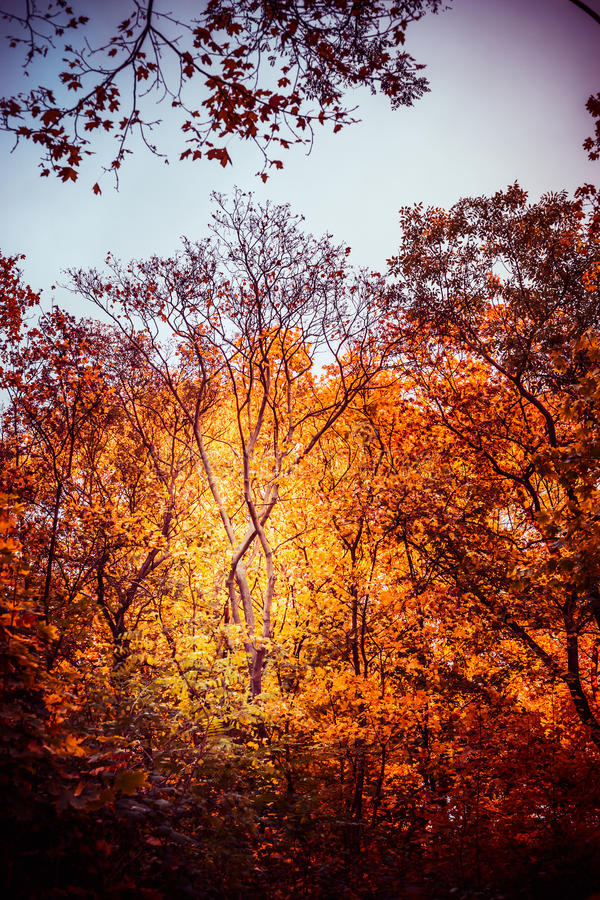 Autumn park or forest with beautiful foliage, fall outdoor nature stock photo