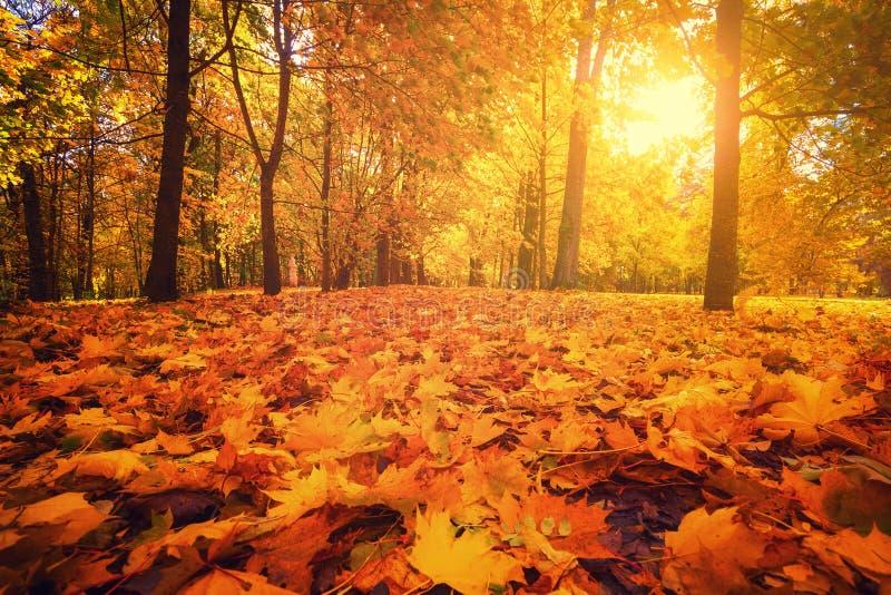 Autumn park. Autumn forest. royalty free stock photo