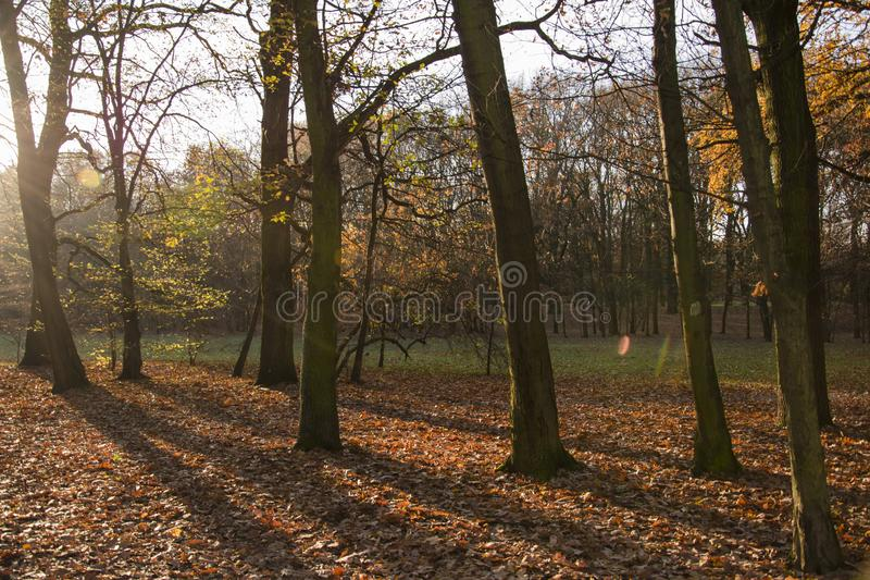 Autumn park, forest with sun rays beautiful landscape photo. Almost bare trees and colorful leaves on the ground. royalty free stock photography