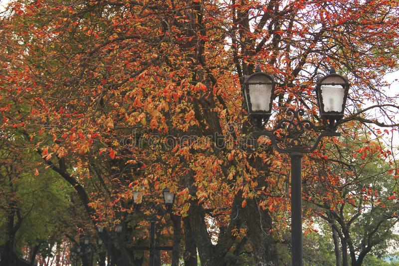 Autumn Park. Wrought iron lanterns. Red leaves on the trees royalty free stock images
