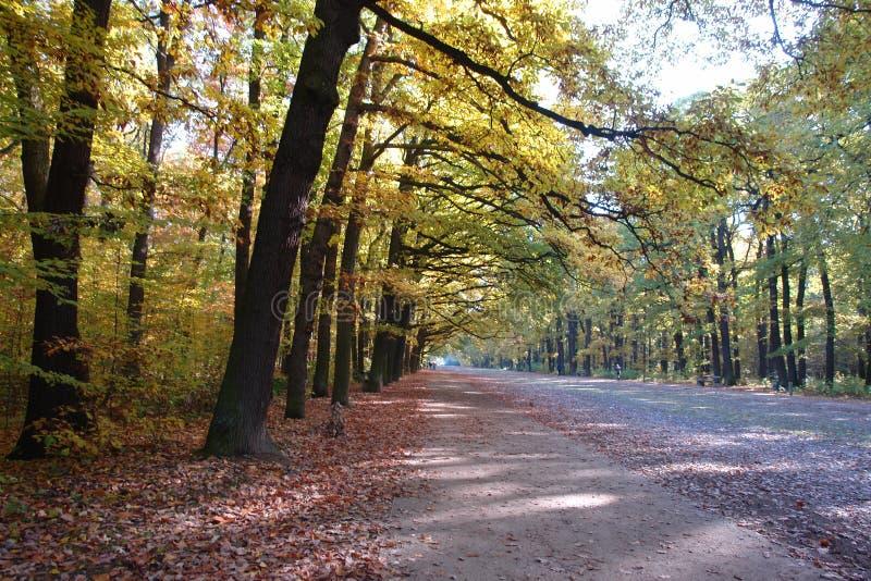 Autumn park HvÄ›zda Game Reserve (Obora HvÄ›zda), Prague royalty free stock photography