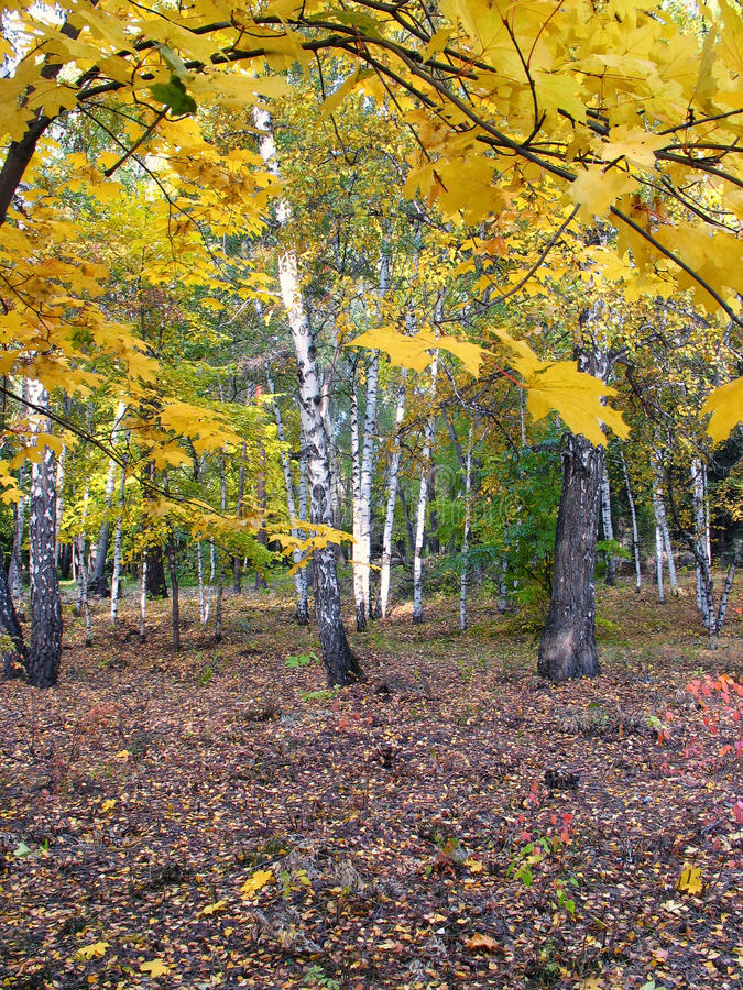 In the autumn park. Landscape stock photo