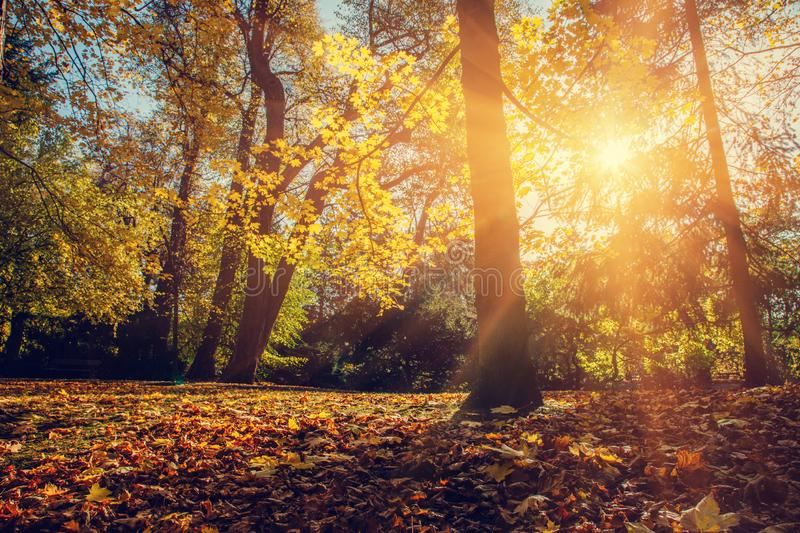 Autumn park, light shining through trees and leaves stock photography