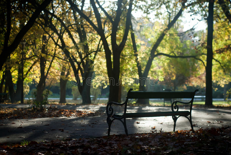 Download Autumn in the park stock image. Image of meditative, green - 42128171