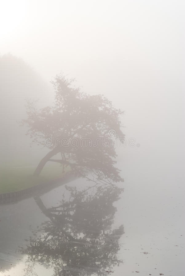 Download Autumn Park On A Misty Morning. Stock Photo - Image: 39121946