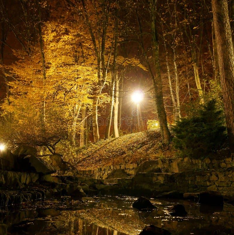 Autumn park at night. Light of the lantern is reflected in a pond in autumn park at night stock image