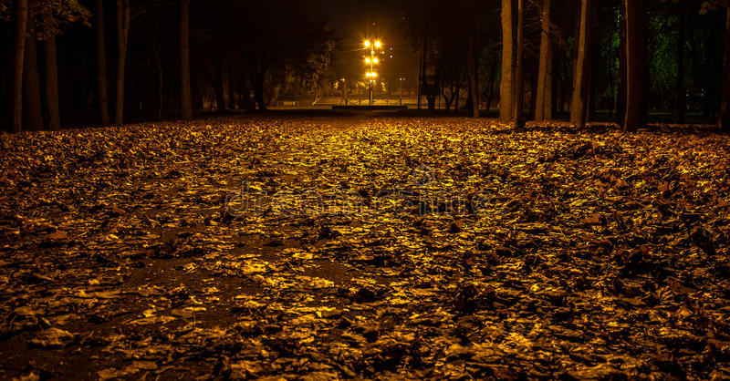 Autumn park at night. Glowing lights. Road with autumn leaves. Background royalty free stock photo