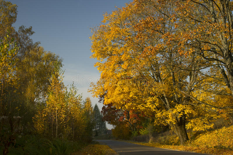 Download Autumn park and old road editorial stock photo. Image of yellow - 34682513