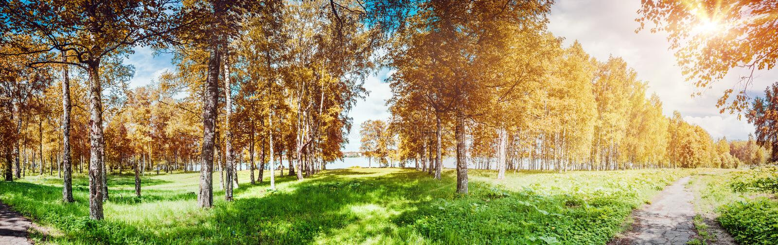 Autumn park panorama. Ecology plants outdoor background stock photography