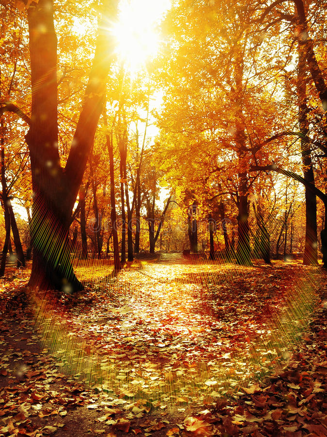 Autumn park path. Autumnal late fall early winter central park in Yambol - Bulgaria. One sunny day forest path with dry falling leaves