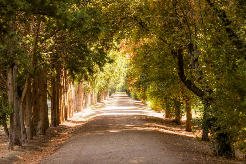 Autumn park pathway under the trees stock photos