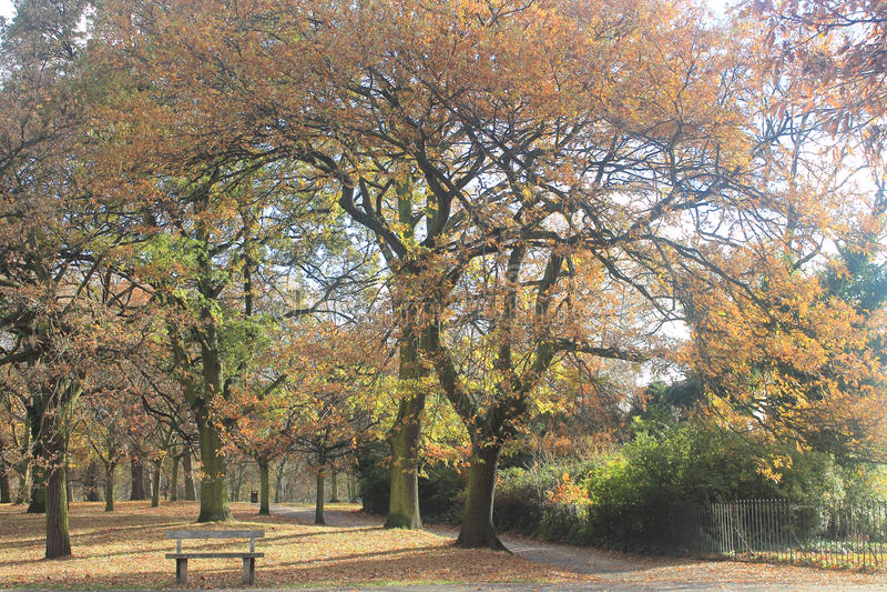 Autumn in the park. Regent`s Park in London in romantic autumn light stock images