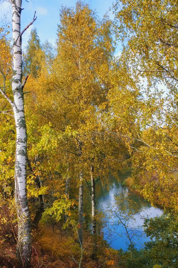 Autumn park with river royalty free stock photo