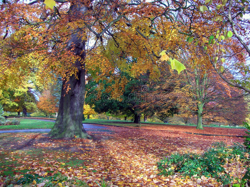 Autumn park scene royalty free stock images