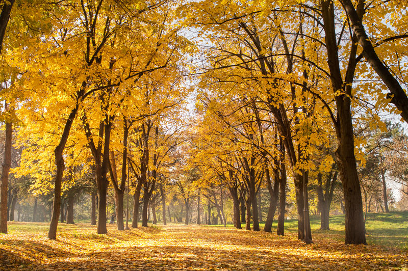Autumn park scene of a path in fallen leaves. Autumn park scene of a path covered in fallen leaves royalty free stock images
