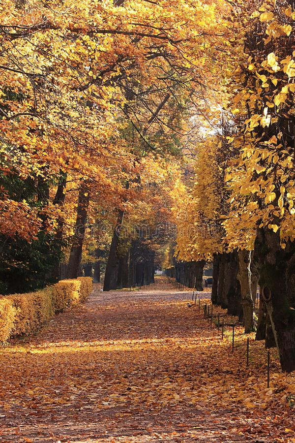 Autumn park in September on a bright warm day, a path with red leaves. Beautiful bright landscape in the park, seasons. Golden autumn season stock photo