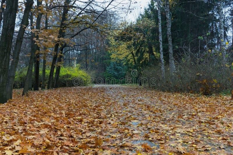 Autumn in park Sofiyivka. Uman city, Ukraine royalty free stock images