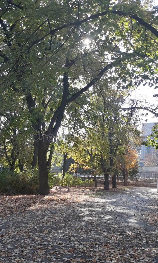 Autumn in park. Autumn in, trees, leaves, nature, relaxing, fall, atmosphere royalty free stock photos