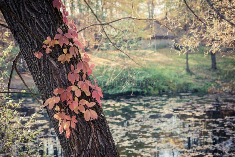 Autumn Park und Teich lizenzfreie stockbilder