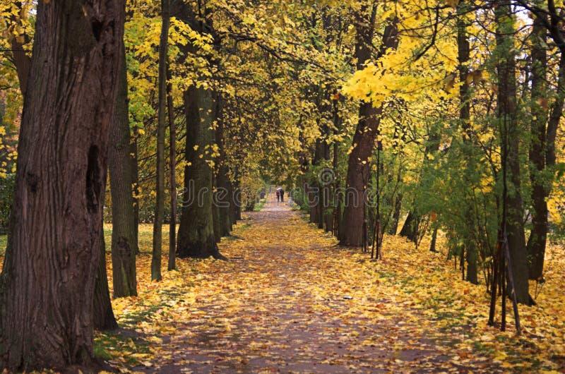 Autumn park walk 1 stock images