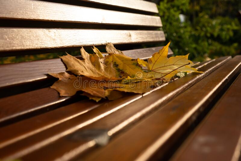 Autumn park wooden bench in the park. With leaves stock photo