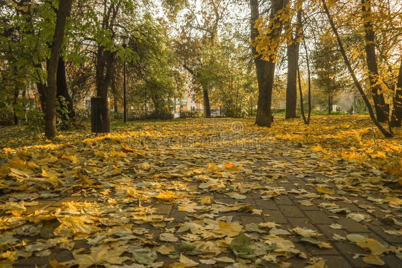 Autumn park, yellow fallen leaves from trees, sunny day. Autumn park, yellow fallen leaves from trees, bright sunny day stock image
