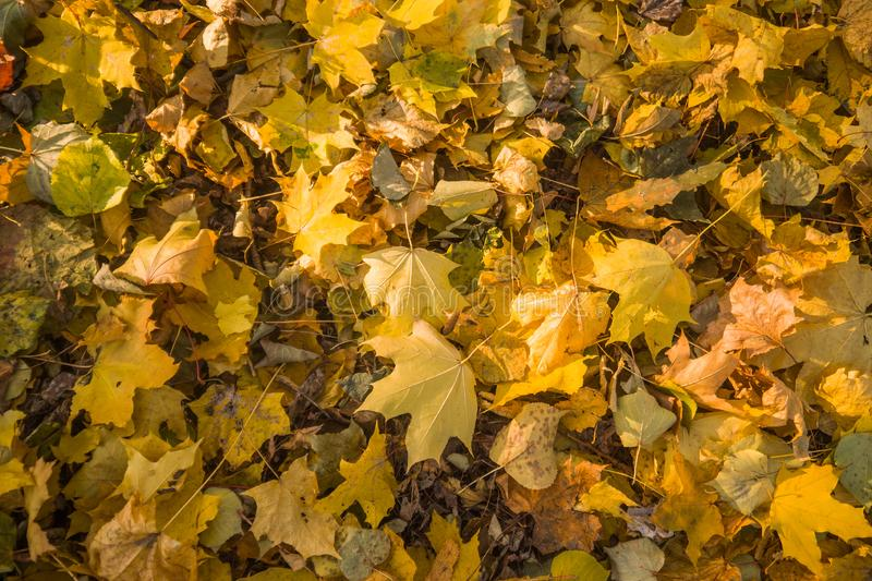 Autumn park, yellow fallen leaves from trees, sunny day. Autumn park, yellow fallen leaves from trees, bright sunny day stock photography