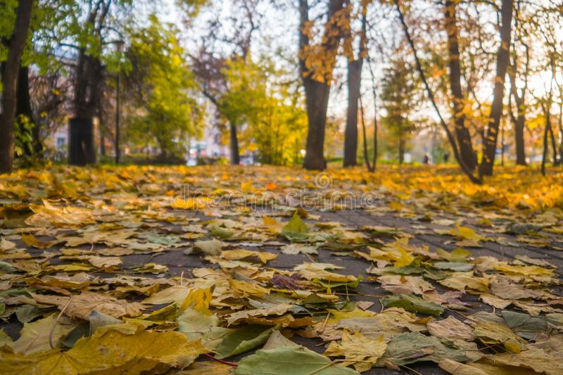 Autumn park, yellow fallen leaves from trees, sunny day. Autumn park, yellow fallen leaves from trees, bright sunny day stock photo