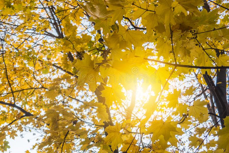 Autumn park, yellow fallen leaves from trees, sunny day. Autumn park, yellow fallen leaves from trees, bright sunny day royalty free stock photo