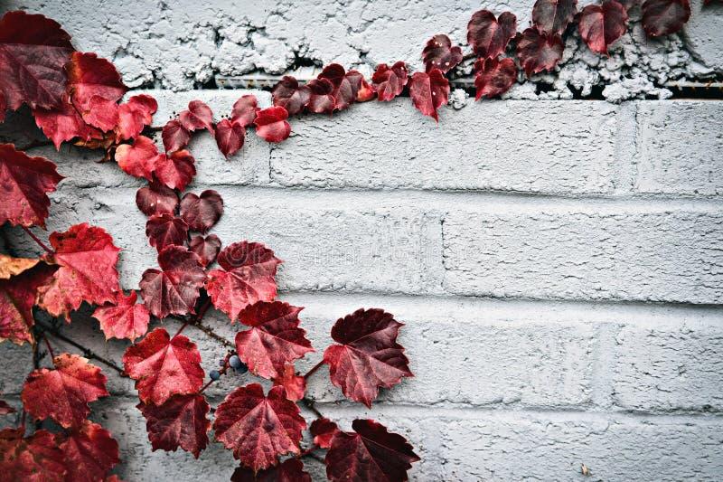Autumn Partial Border - rote Trauben-Blätter stockbilder