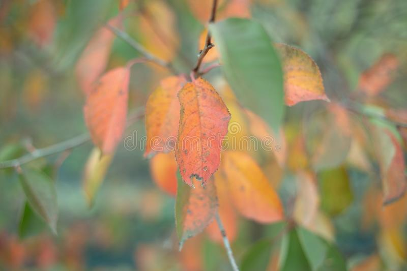 Autumn pastel colors of nature. Pastel green yellow red colors of autumn nature royalty free stock images