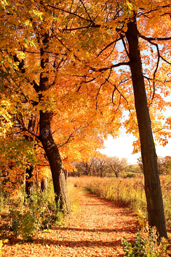 Download Autumn Path stock image. Image of october, light, branches - 13917547
