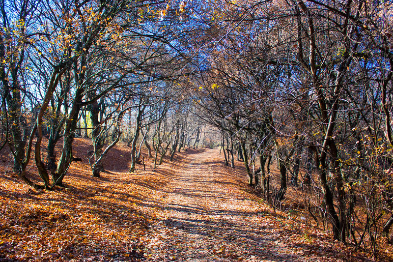 Download Autumn path stock image. Image of october, highland, panorama - 17000375