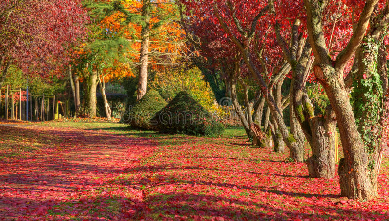 Download Autumn path stock photo. Image of park, nature, outdoors - 22883624