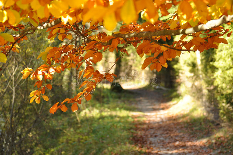 Download Autumn Path stock photo. Image of natural, bright, path - 27273366