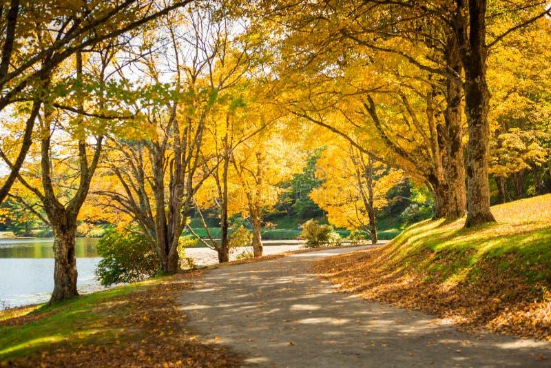 Autumn Path royalty-vrije stock foto