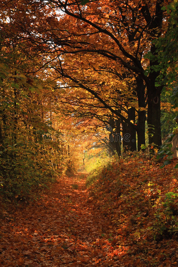 Download Autumn path stock image. Image of nature, orange, fall - 6765867