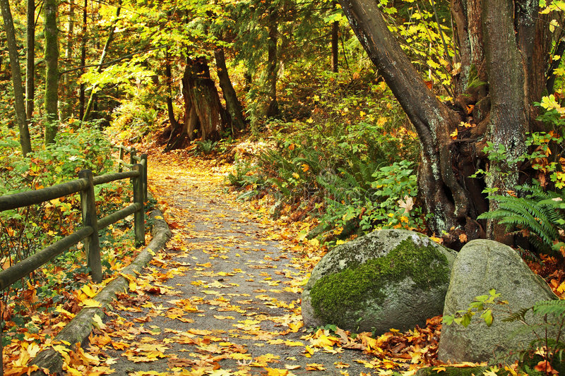 Download Autumn path stock image. Image of colorful, serence, autumn - 6903197