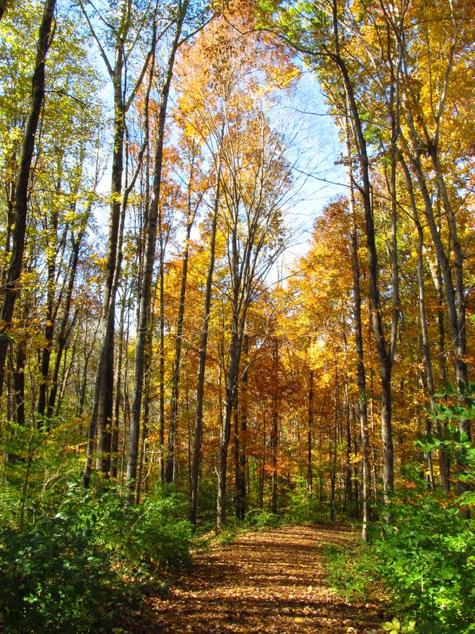 Autumn Path photographie stock libre de droits
