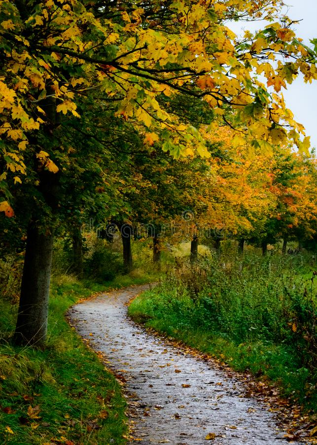 Free Autumn Path - Denmark Stock Image - 103153901