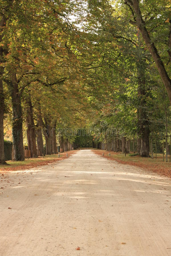 Download Autumn Path Through A Forest Stock Image - Image: 27612823