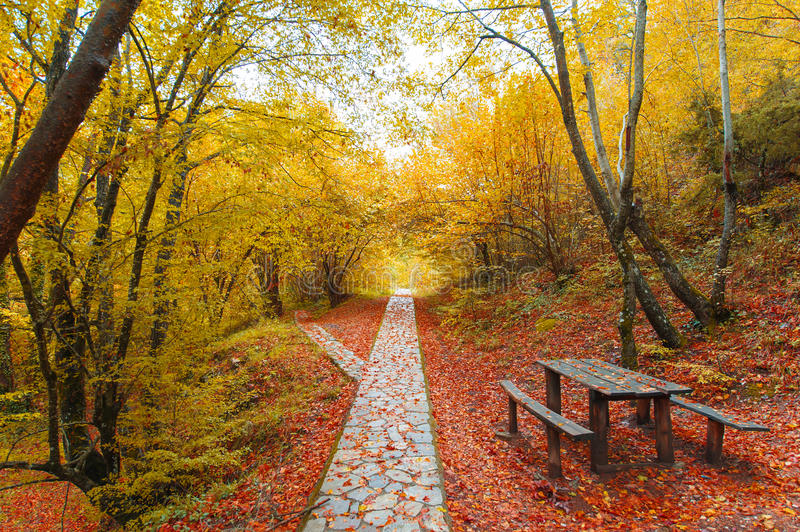 Download Autumn path in the forest stock photo. Image of landscape - 28372108