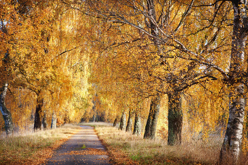 Download Autumn path stock photo. Image of footpath, countryside - 34465058