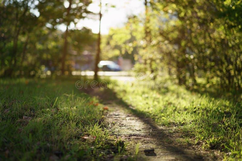 Autumn path ground level closeup photo. Shallow focus royalty free stock images