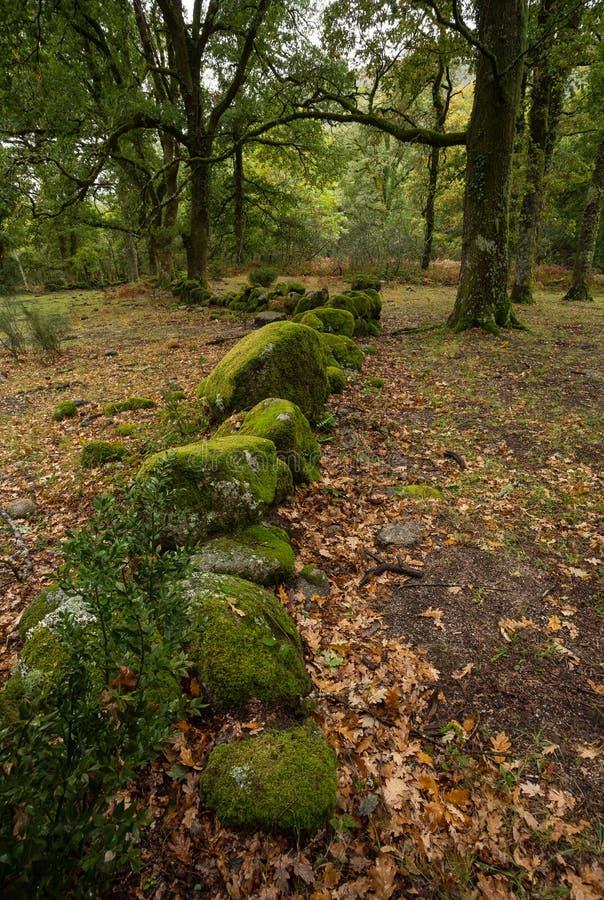 Autumn Path in `Mata da Albergaria` Geres , National Park. stock images