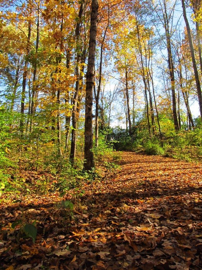 An Autumn Path5 stock image