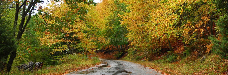 Download Autumn path panorama stock image. Image of fall, life - 23957271