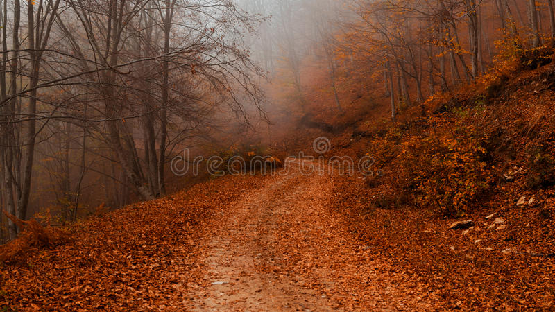 Download Autumn path stock image. Image of many, forest, fantasy - 35284185