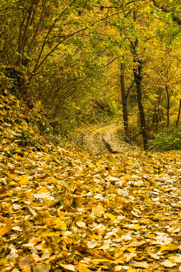 Autumn path. In the woods covered with leaves royalty free stock image